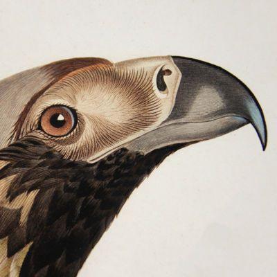 Ornithology List 2020 - thumbnail