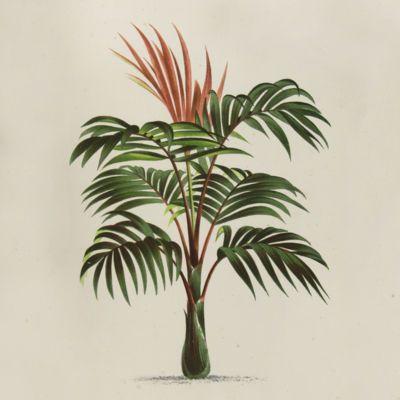 Botany - thumbnail