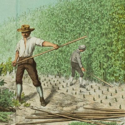 image for Agriculture - Forestry