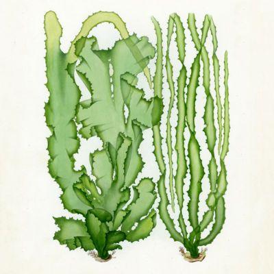 image for Algae