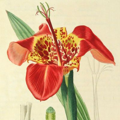 image for Botany Prints