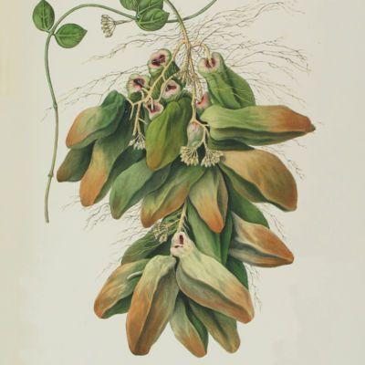 image for Botany