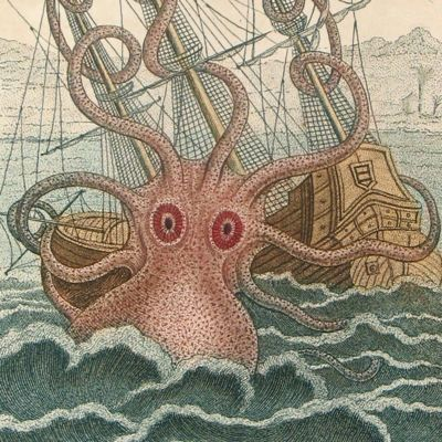 image for Cephalopoda