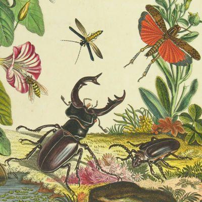 image for Entomology
