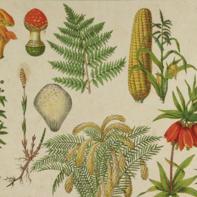 image for General Botany