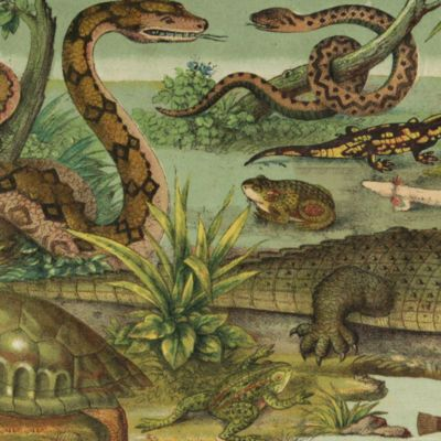 image for General Herpetology