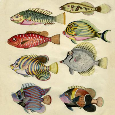 image for General Ichthyology