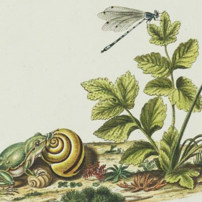 image for General Natural History