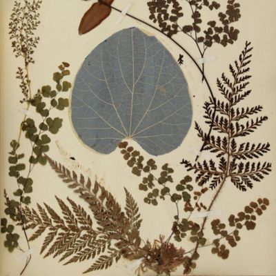 image for Herbaria