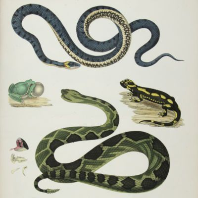 image for Herpetology