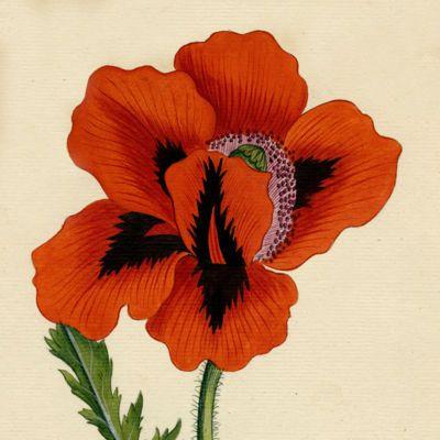 image for Medical Plants
