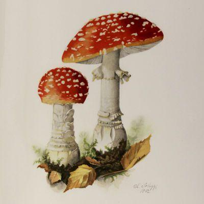 image for Mycology - Fungi - Mushrooms