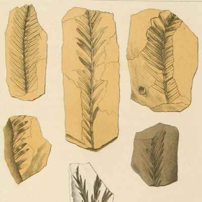 image for Palaeobotany