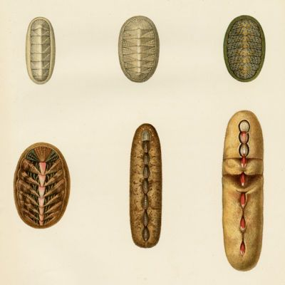 image for Small Groups Malacology