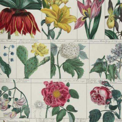 image for Spermophyta - Flowering Plants