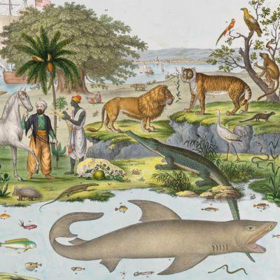 image for Zoology