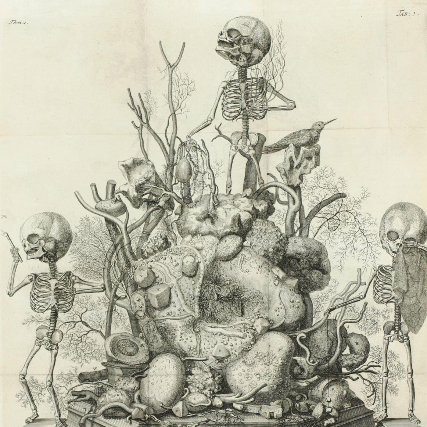 Thesaurus anatomicus primus - decimus; Curae posteriores seu Thesaurus anatomicus omnium praecedentium maximus; Curae renovatae, seu, Thesaurus anatomicus post curas posteriores, novus.